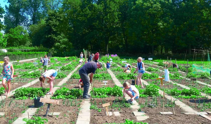 children vegetable garden